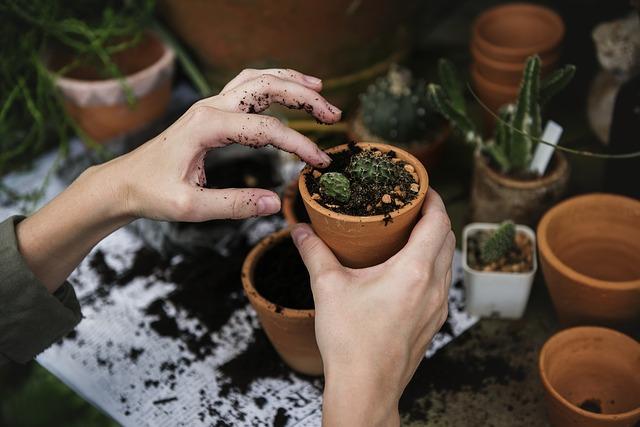 sadenie kaktusu.jpg