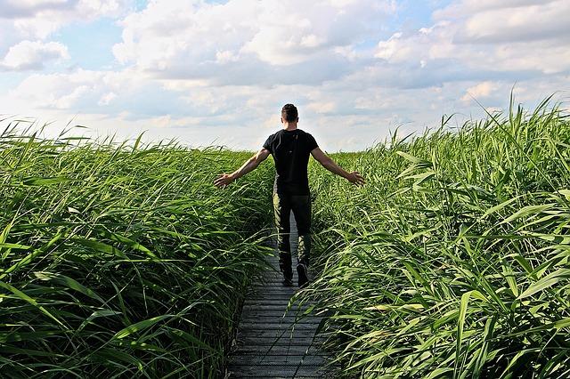 Muž medzi trávou.jpg