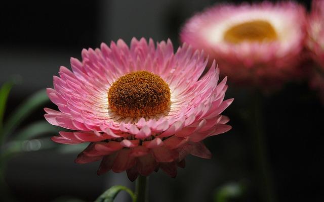 Ružové slamienky.jpg