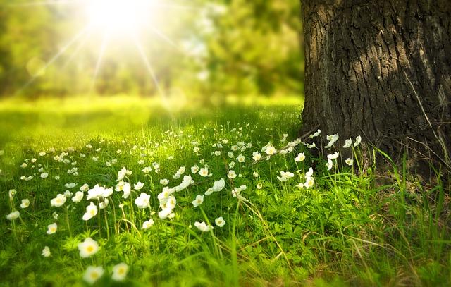 strom, tráva, kvetiny.jpg