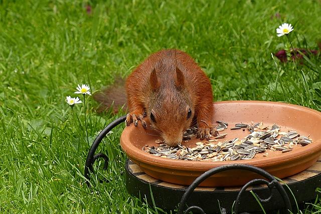 Veverička v záhrade.jpg