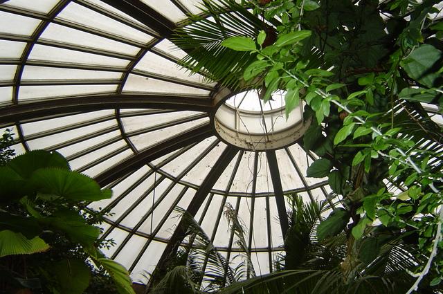 Priestor so zelenými rastlinami a kruhovou presklenou strechou.jpg