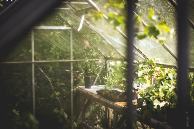 Zimná záhrada s rastlinami, do ktorej prenikajú lúče slnka.jpg