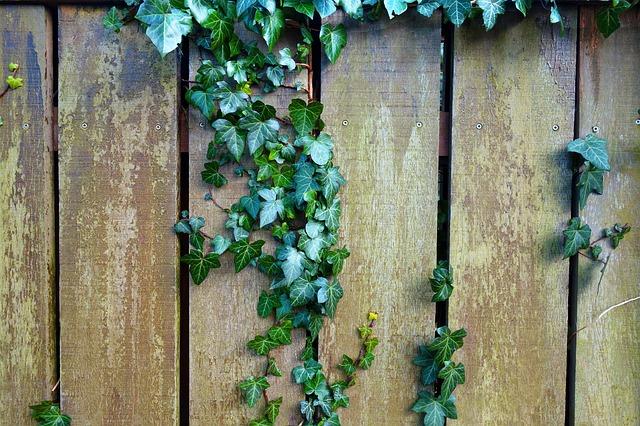Latkový, drevený plot.jpg